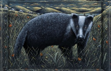 Picture of a badger by P J Crooks