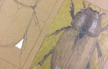Drawing of an insect